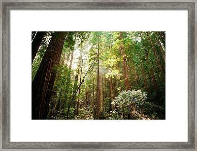Shine Through Framed Print by Ariane Moshayedi