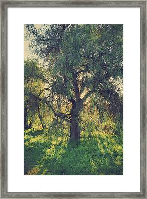 Shine Your Light Framed Print by Laurie Search