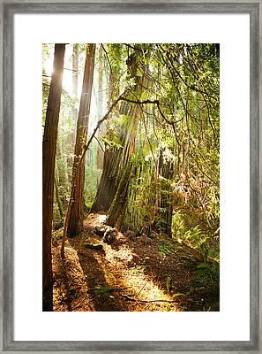 Shining Framed Print by Ariane Moshayedi