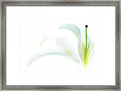 Shining Through Framed Print by Dan Holm