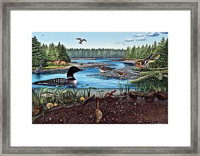Ship Harbor Mudflat In Acadia National Park Framed Print by Logan Parsons