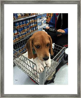 Shopping Cart Framed Print featuring the photograph Shopping With Puppy  by Steven  Digman