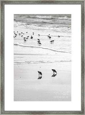 Plundering Plover Series In Black And White 7 Framed Print by Angela Rath