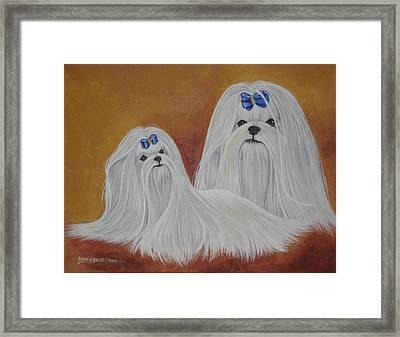 Show Maltese Framed Print by Laura Bolle
