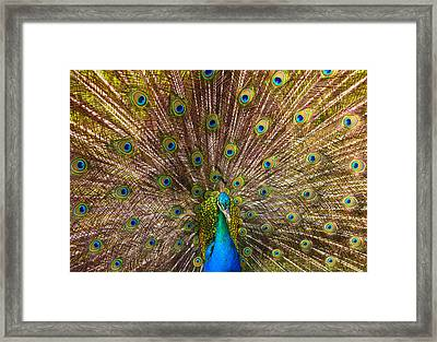 Showing Your Colors Framed Print by Mike  Dawson