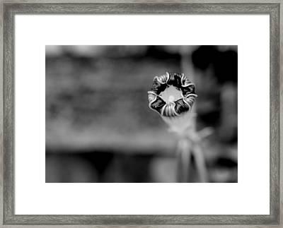Shy Framed Print by Corinne Rhode