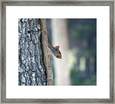 Shy Squirrel Framed Print by Kenneth Albin