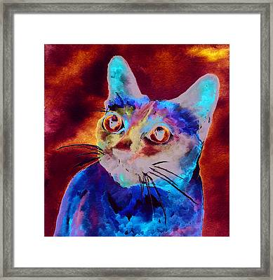 Siamese Cat Framed Print by Christy  Freeman