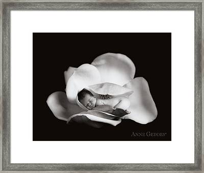 Sian In Magnolia Framed Print by Anne Geddes