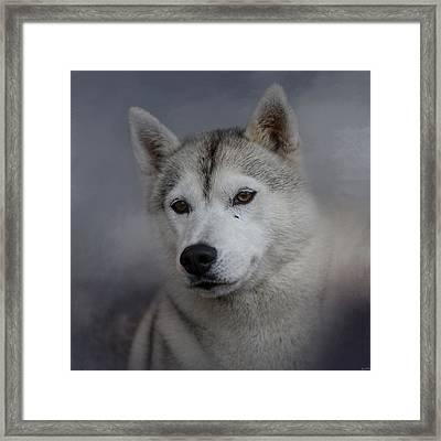 Siberian Husky Framed Print by Jai Johnson