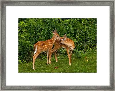 Sibling Love Framed Print by Karol Livote