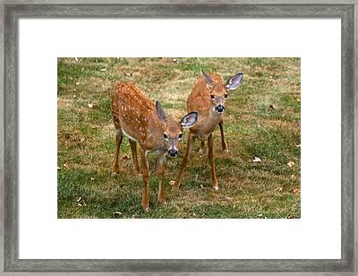 Siblings Visit Framed Print by Karol Livote