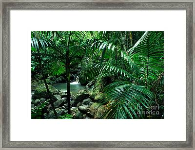 Sierra Palms Waterfall El Yunque Framed Print by Thomas R Fletcher