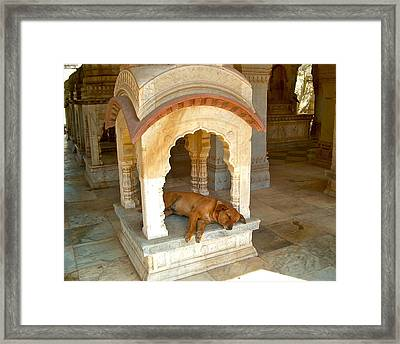 Siesta Time Framed Print by Dorota Nowak