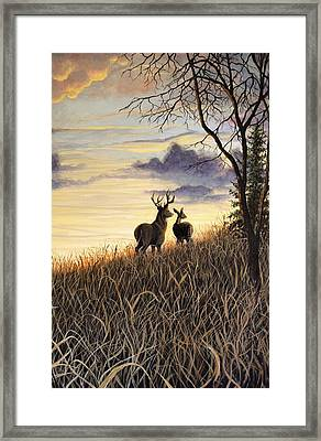 Sigh Whitetail Deer 2 Framed Print by Kimberly Benedict