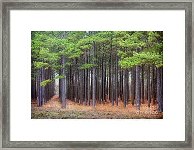 Silence Framed Print by Lynn Sprowl