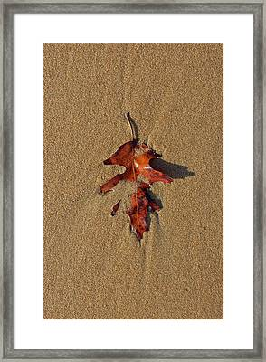 Silent Muse Framed Print by Juergen Roth
