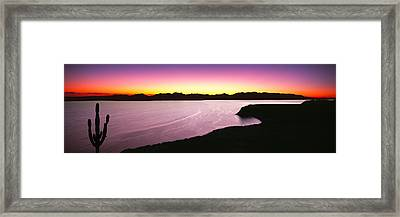 Silhouette Of Lone Cardon Cactus Plant Framed Print by Panoramic Images
