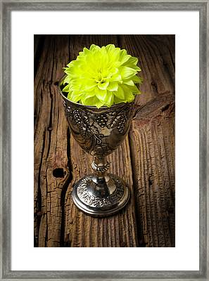 Silver Cup And Dahlia Framed Print by Garry Gay