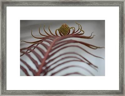 Silver Lady Framed Print by Nicholas Miller