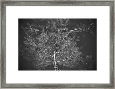 Silver Screen Framed Print by Becca Buecher
