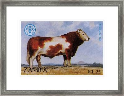 Simmental Bull Framed Print by Lanjee Chee