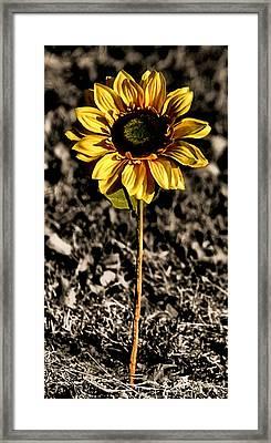 Simplicity Framed Print by Karen M Scovill