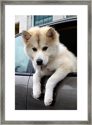 Simply Better Framed Print by Paul Wash