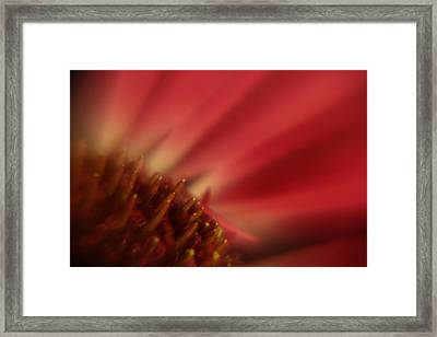 Simply Red Framed Print by Carol Japp