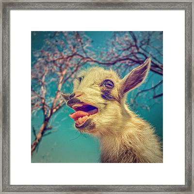 Sing It Again Framed Print by TC Morgan