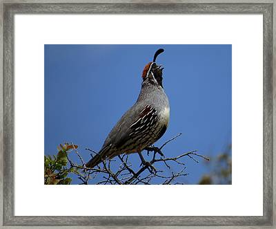 Sing It Framed Print by Feva  Fotos