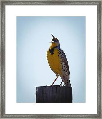 Sing Me A Song Framed Print by Ernie Echols
