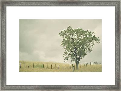 Single Oak Tree Framed Print by Pamela N. Martin