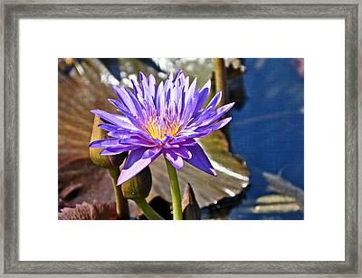 Singularly Purple Framed Print by Marty Koch