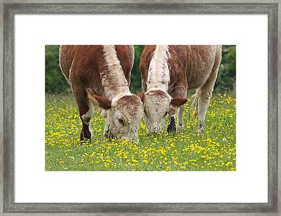 Sisters - Brown Cows Framed Print by Gill Billington
