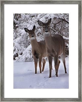 Sisters Framed Print by Scott Hovind