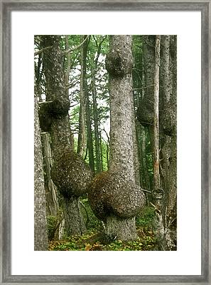 Form Framed Print featuring the photograph Sitka Spruce Burls On The Olympic Coast Olympic National Park Wa by Christine Till