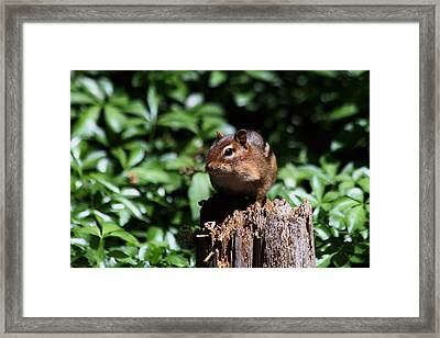 Sitting On A Post Framed Print by Karol Livote