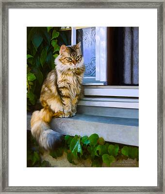 Sitting Pretty Framed Print by Bob Nolin