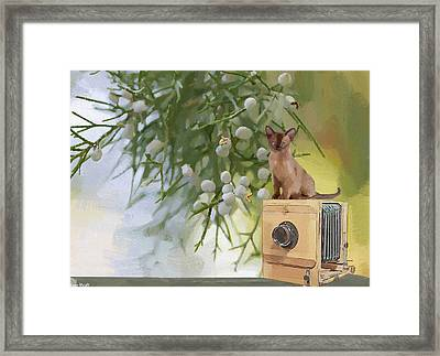 Sitting Pretty Framed Print by L Wright