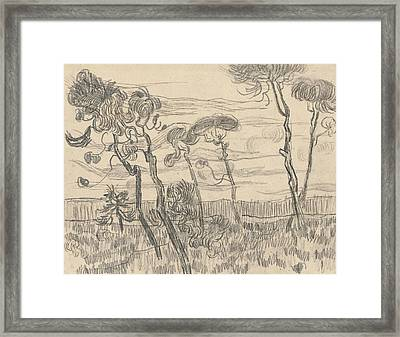 Six Pines Near The Enclosure Wall Framed Print by Vincent Van Gogh
