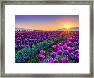 Skagit Valley Sunrise Framed Print by Kyle Wasielewski