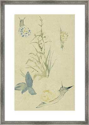 Sketches Of Snails, Flowering Plant Framed Print by Edouard Manet