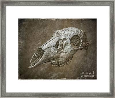 Skull On Brown Texture Framed Print by Randy Steele