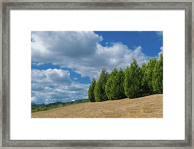 Sky And Trees Framed Print by Daniel LaFollette
