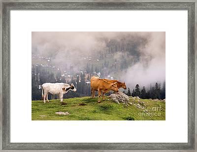 Sky High Cows Framed Print by Svetlana Sewell