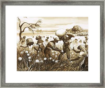 Slaves Picking Cotton Framed Print by English School