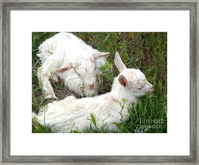Sleeping Babies  Framed Print by Stephanie  Skeem