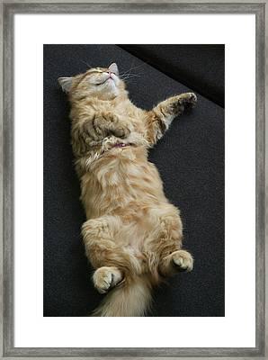 Sleeping Beauty Framed Print by John Janicki