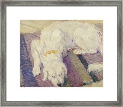 Sleeping Dog Framed Print by Franz Marc